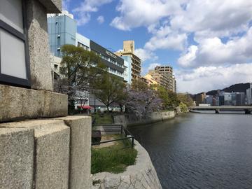 桜0401 (2).JPG